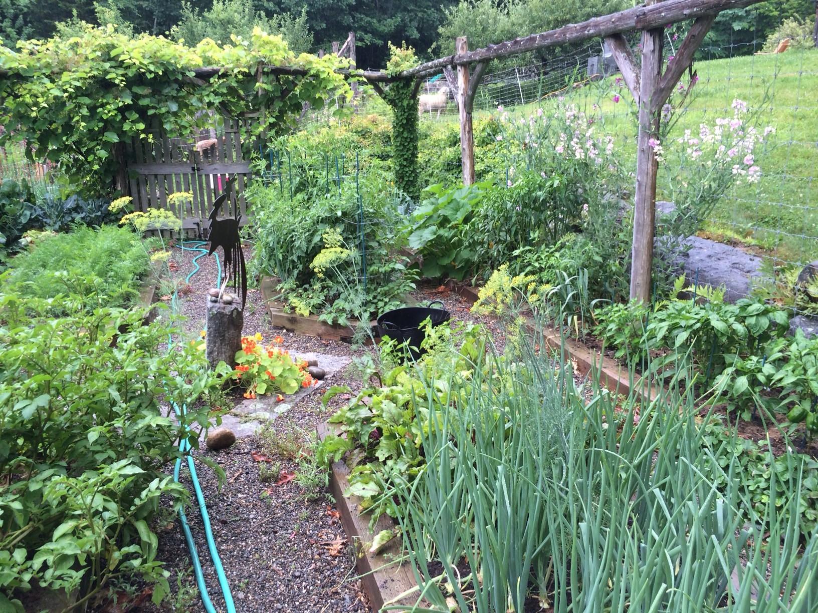 The garden at its summer peak
